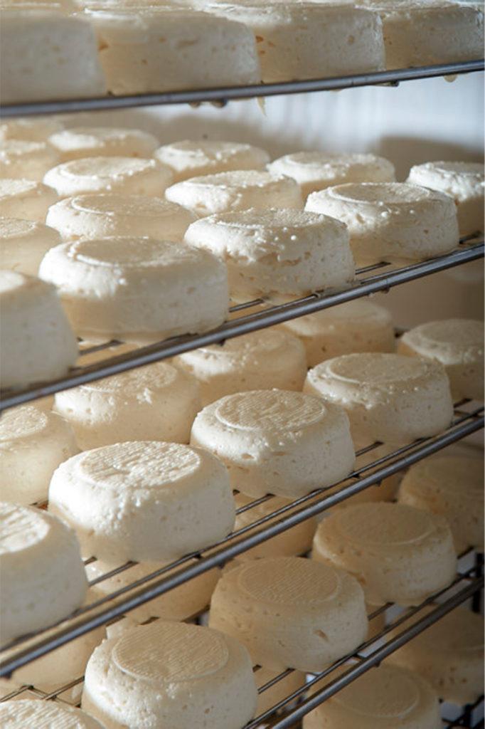 Fromage à pâte fraîche fait avec du lait de vache