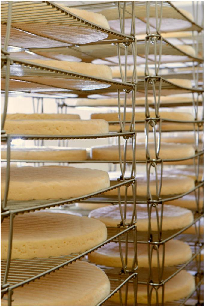 Fromage à pâte molle fait avec du lait de vache