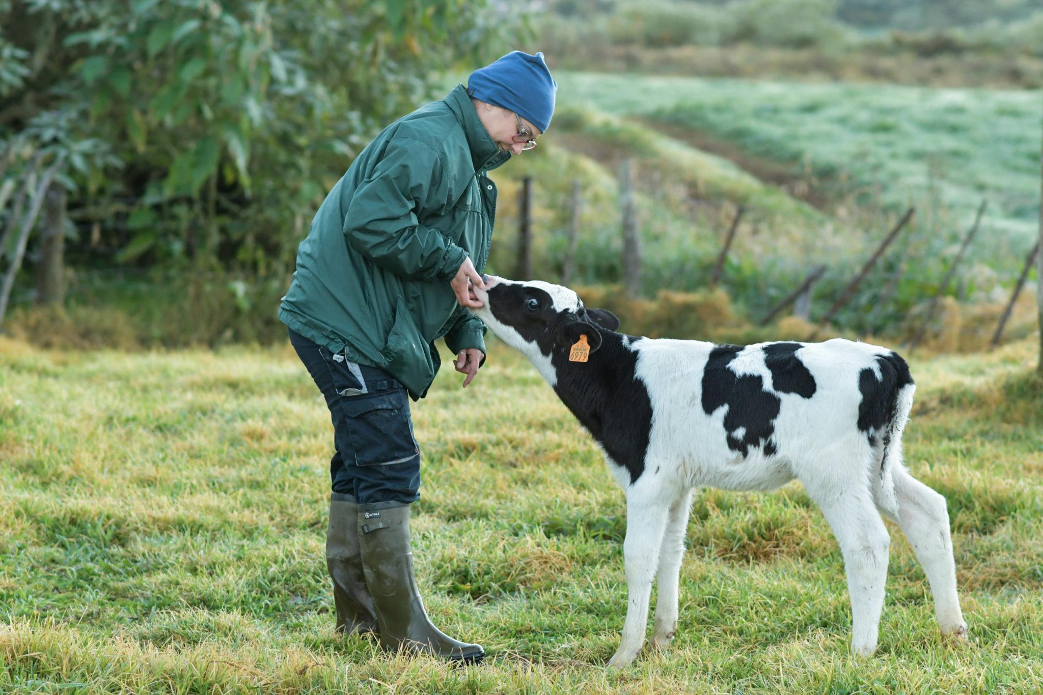 Fermier à côté d'une vache laitière