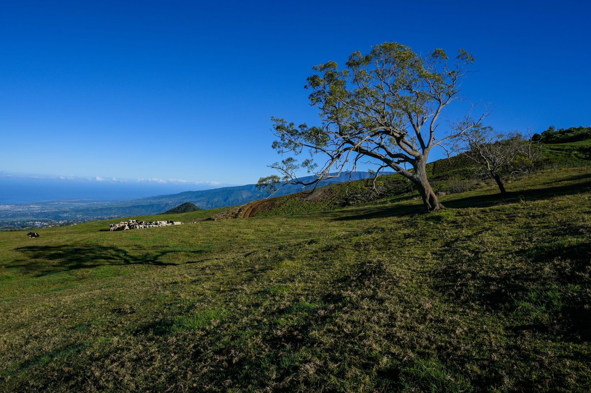 Troupeau de vaches dans une prairie