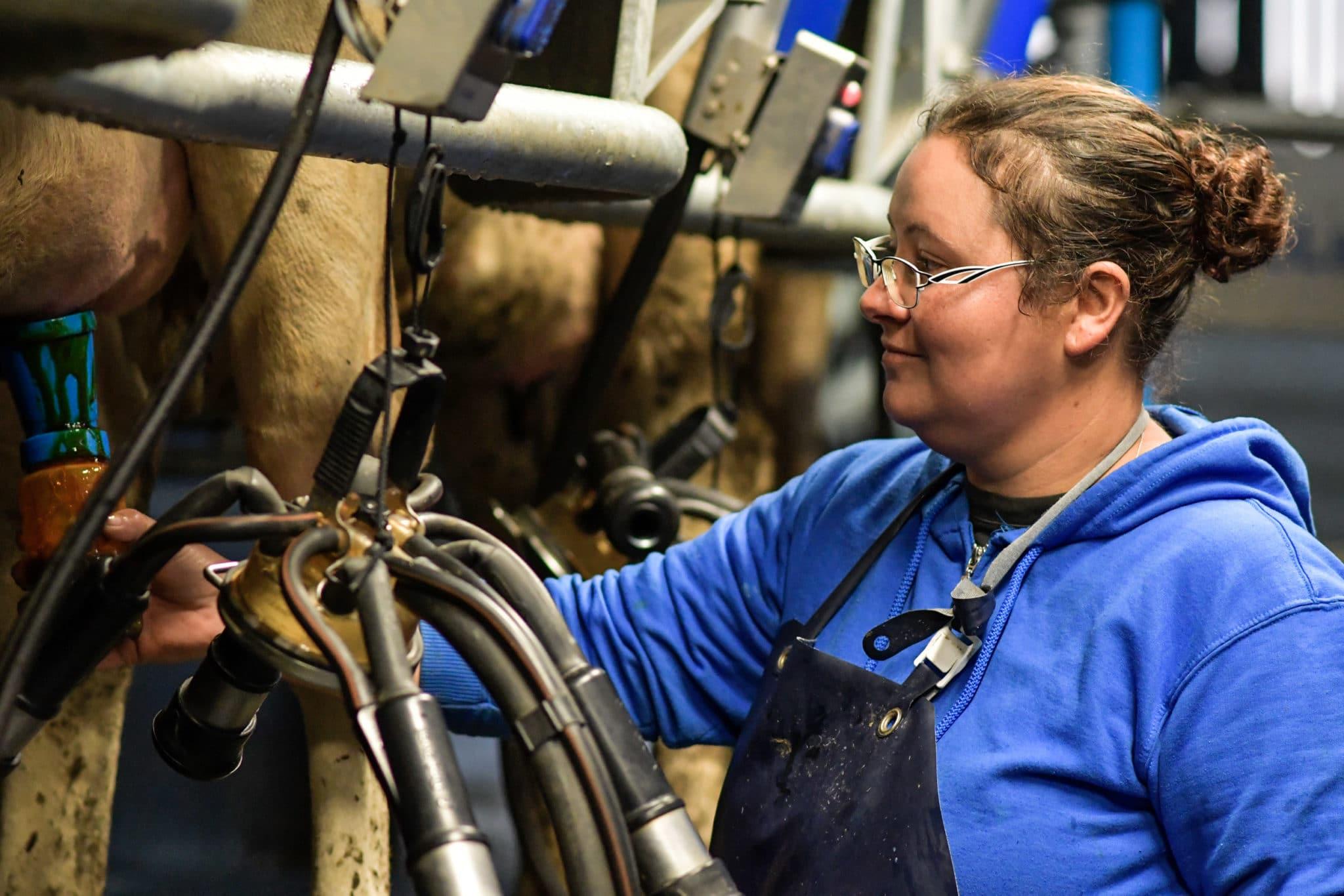 Eleveuse qui prépare la traite des vaches
